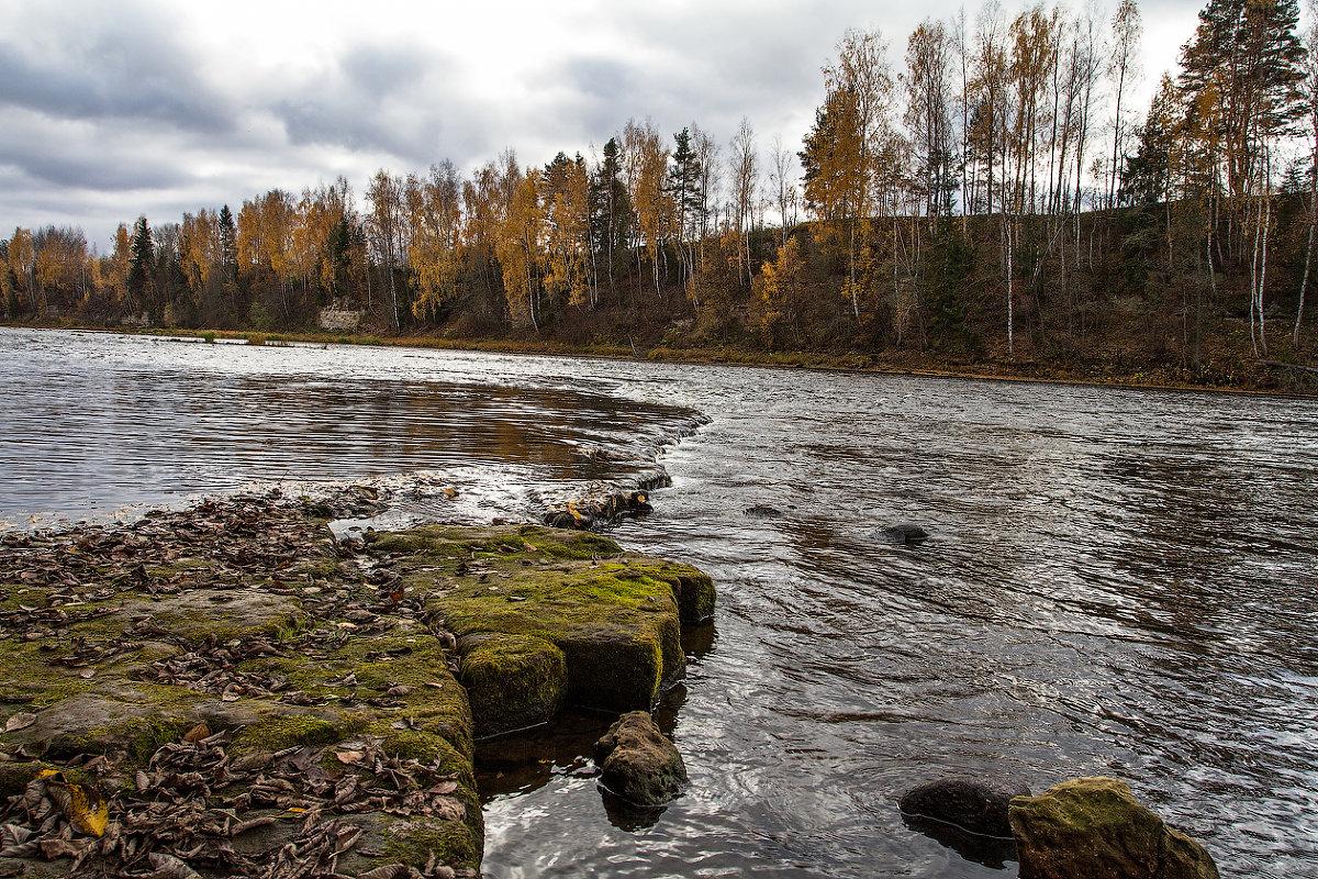 Река Мста в Новгородской области
